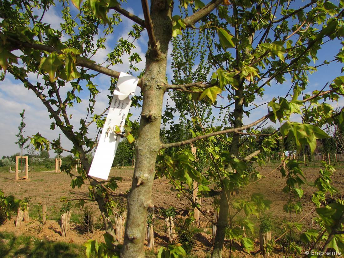 Plantation de l 39 arboretum l 39 union empreinte bureau for Agence empreinte paysage